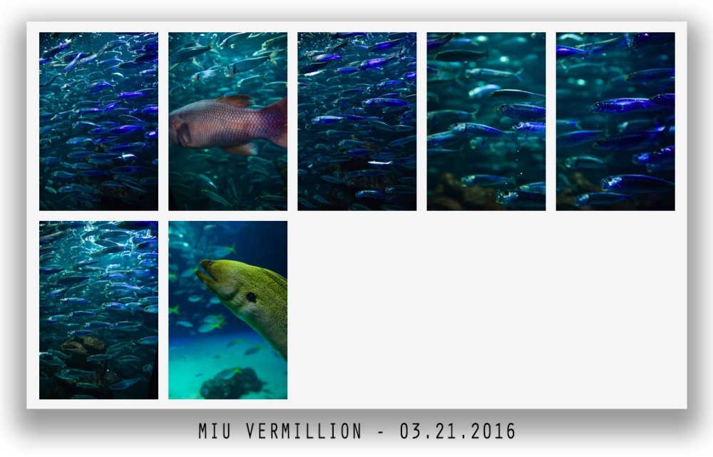 miu vermillion - stock photography
