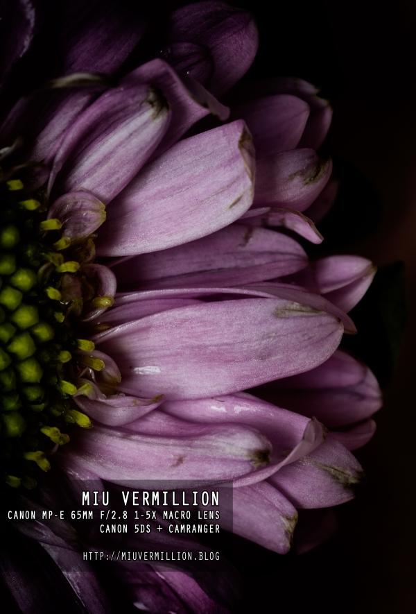 Canon MP-E 65mm f/2.8 1-5X Macro Lens | miu vermillion photography blog