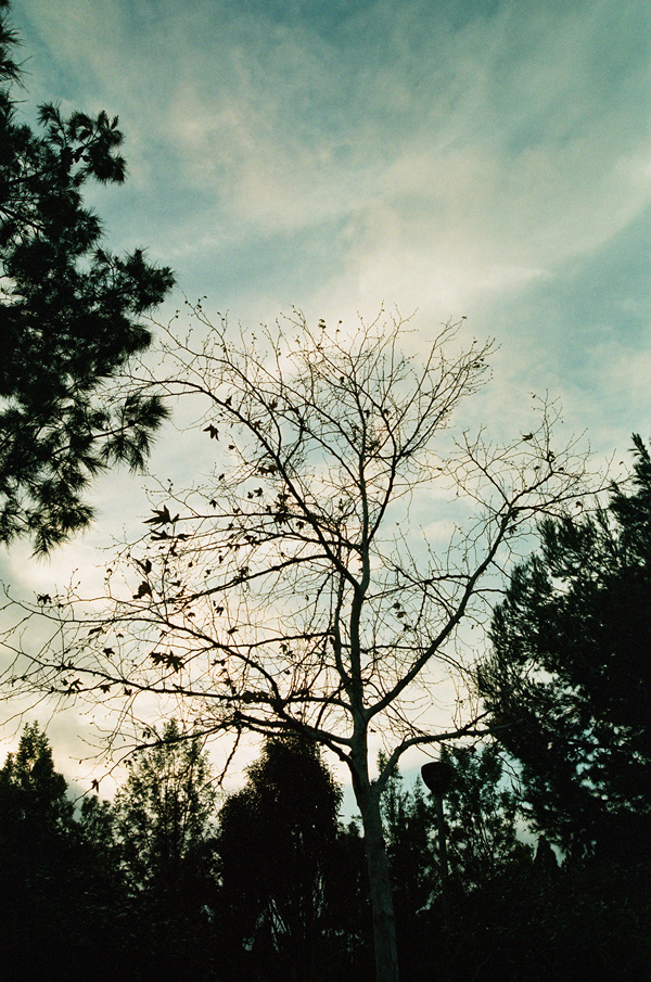 Washi X 35mm Film // analog photography - via Miu Vermillion