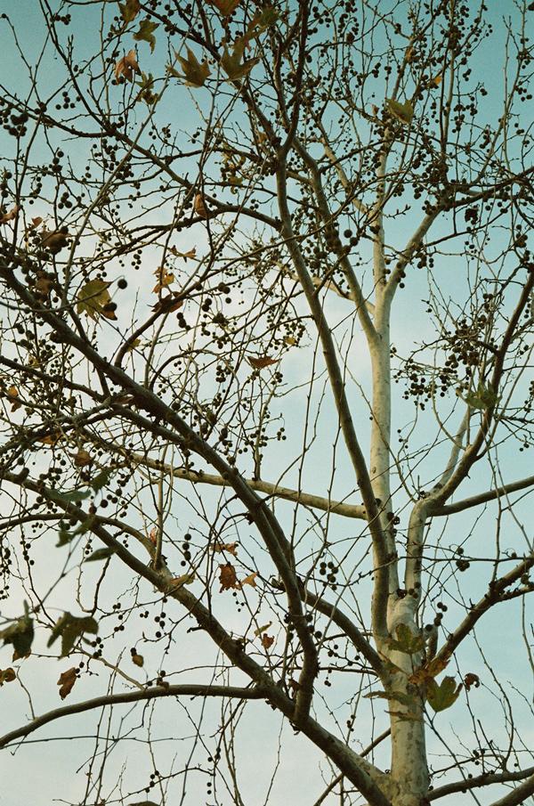 Washi X 35mm Film // analog photography